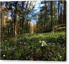 Raccoon Creek Flowers Acrylic Print