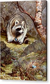 Raccoon Found Treasure  Acrylic Print by Frank Wilson
