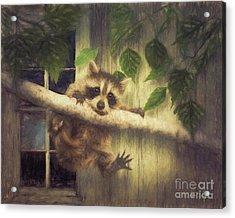 Raccoon Hangin' Around Acrylic Print by Tim Wemple