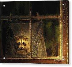 Raccoon Pants Acrylic Print by Tim Wemple