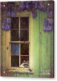 Raccoon Window Acrylic Print