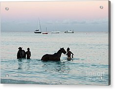 Race Horses And Grooms Acrylic Print by Barbara Marcus