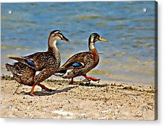 Race You To The Water Acrylic Print by Carolyn Marshall