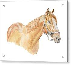 Racehorse Acrylic Print