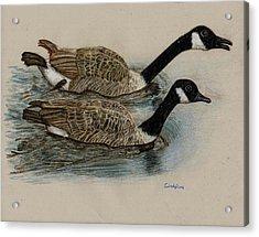 Racing Geese Acrylic Print by Cynthia  Lanka