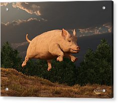 Racing Pig Acrylic Print by Daniel Eskridge