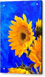 Acrylic Print featuring the photograph Radiance by Brenda Pressnall