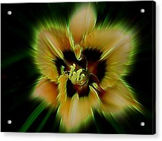 Radiant Daylily Acrylic Print by Shirley Sirois