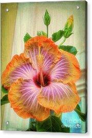 Radiant Hibiscus Acrylic Print