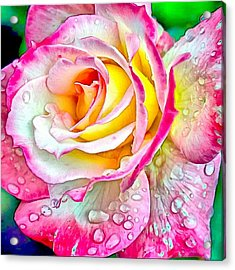 Radiant Rose Of Peace Acrylic Print
