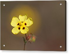 Acrylic Print featuring the photograph Radiate by Richard Patmore