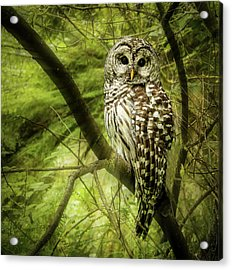 Radiating Barred Owl Acrylic Print by Jean Noren