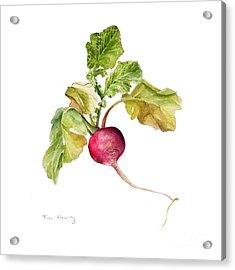 Radish Acrylic Print by Fran Henig