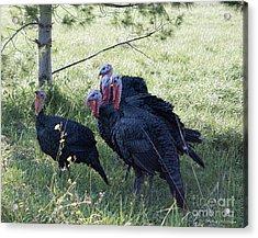 Rafter Of Wild Turkeys Acrylic Print