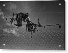 Ragged On A Fence Acrylic Print