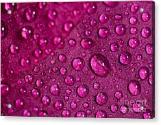 Rain And Bougainvillea Petals Acrylic Print