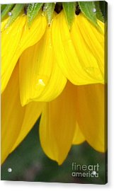 Rain And Sunshine On A Colorado Wildflower Acrylic Print