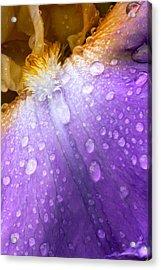 Rain Covered Iris Acrylic Print by Amanda Kiplinger