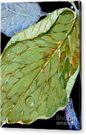Acrylic Print featuring the painting Rain Drop  by Diane Ursin