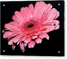 Rain Drops Acrylic Print by Cathie Tyler
