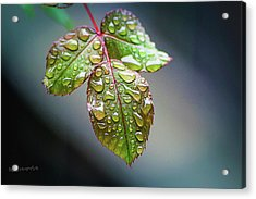 Rain Drops Acrylic Print