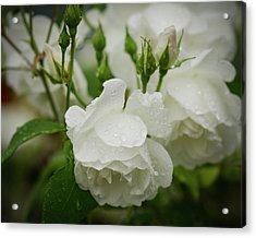 Rain Drops In Our Garden Acrylic Print