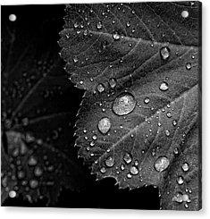 Rain Drops On Leaf Acrylic Print by Robert Ullmann