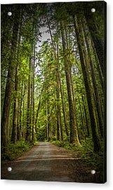Rain Forest Dirt Road Acrylic Print