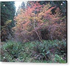 Rain Forest Fall Acrylic Print