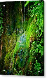 Rain Forest Acrylic Print by Louis Dallara