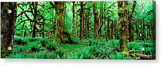 Rain Forest, Olympic National Park Acrylic Print by Panoramic Images