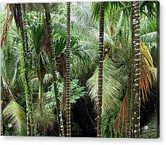 Rain Forest Palau Acrylic Print