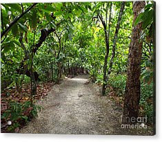 Rain Forest Road Acrylic Print