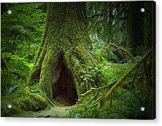Rain Forest Walk 2 Acrylic Print