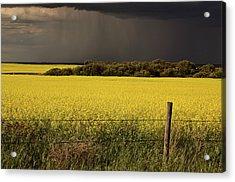 Rain Front Approaching Saskatchewan Canola Crop Acrylic Print by Mark Duffy