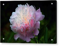 Acrylic Print featuring the photograph Rain-kissed Peony by Byron Varvarigos