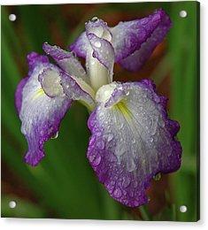 Rain-soaked Iris Acrylic Print