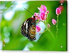 Rainbow Butterfly Acrylic Print by Peggy Franz