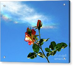 Rainbow Cloud And Sunlit Roses Acrylic Print by CML Brown