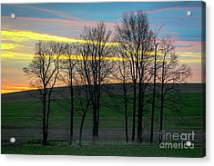 Rainbow Color Tree Horizon Acrylic Print