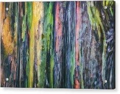 Rainbow Forest Acrylic Print by Ryan Manuel