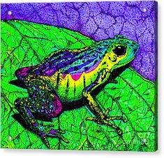Rainbow Frog 2 Acrylic Print by Nick Gustafson
