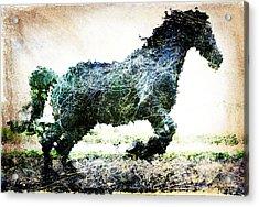 Rainbow Horse Acrylic Print by Andrea Barbieri