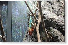 Rainbow Iguana   Acrylic Print