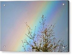 Rainbow Acrylic Print by Laurie Hasan