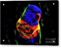 Rainbow Lorikeet - Fractal Acrylic Print