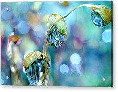 Rainbow Moss Drops Acrylic Print by Sharon Johnstone
