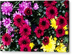Rainbow Of Color Flowers Acrylic Print