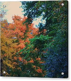 Rainbow Of Fall Acrylic Print by Trudi Southerland