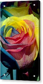 Rainbow Of Love 2 Acrylic Print by Karen Musick